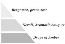 Olfactory pyramid